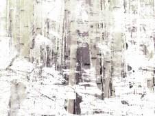 Bosque de Bambú en invierno