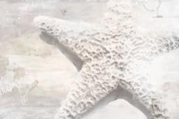 Estrella de lúz