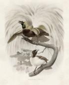Aves del Paraíso 2