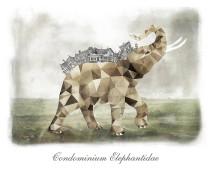 Condominium Elephantidae
