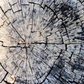 Edad de un árbol