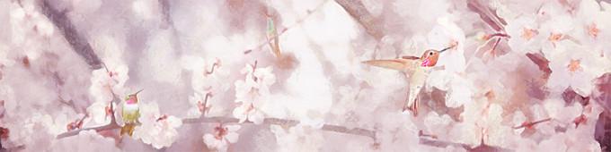 Cerezo y colibríes
