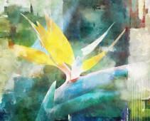 Flor del cielo 150 x 120