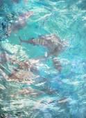 Música acuática