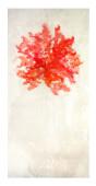 Coral rojo flotante